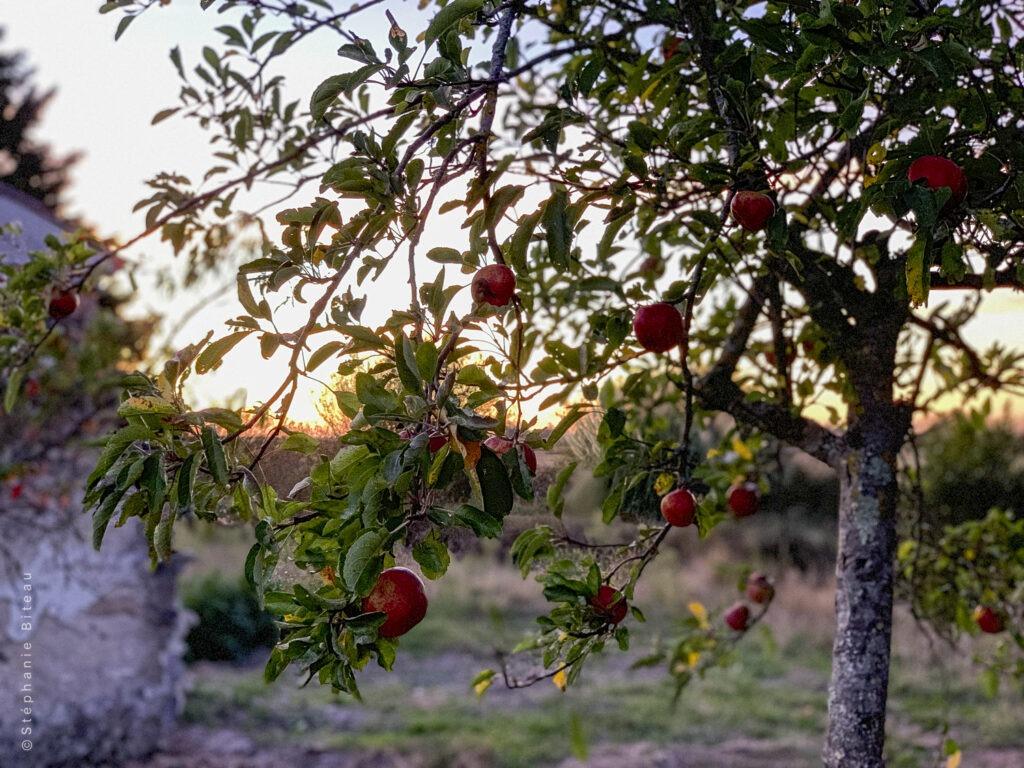 … Aime le goût des recettes oubliées – Gelée de pommes aux épices, un délice