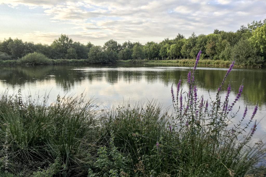 """… Aime sauter dans le grand bain – Eco-hameau, c'est parti & """"recrutement"""""""